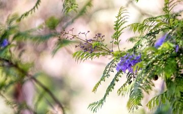 flowers, nature, macro, background, branches, blur