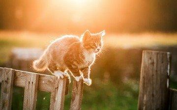 кот, мордочка, усы, кошка, взгляд, забор, котенок