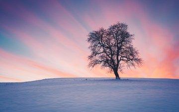 snow, nature, tree, sunset, winter, landscape