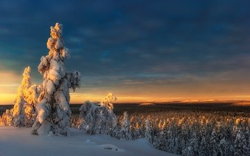 the sky, trees, snow, nature, forest, sunset, winter