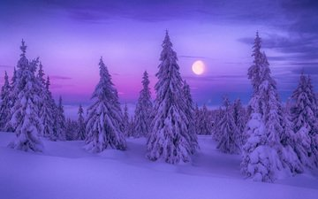 night, trees, snow, nature, forest, winter, the moon, ate