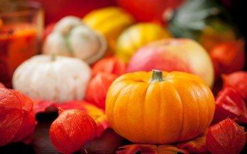 autumn, harvest, vegetables, pumpkin, still life, physalis, the gifts of autumn