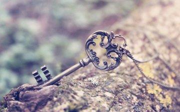 tree, macro, key