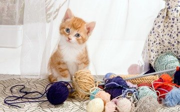 шторы, кот, мордочка, кошка, взгляд, котенок, окно, малыш, клубки, спицы, пряжа