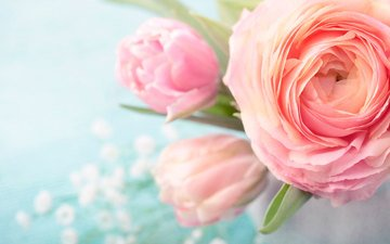 цветы, лепестки, букет, ранункулюсы