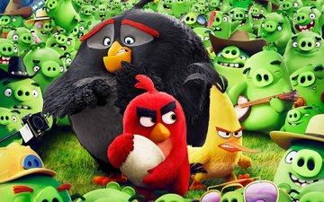 cartoon, angry birds