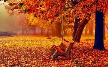 деревья, листья, парк, туман, осень, скамейки, листопад, аллея