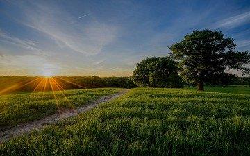 природа, лес, пейзаж, утро, поле, рассвет