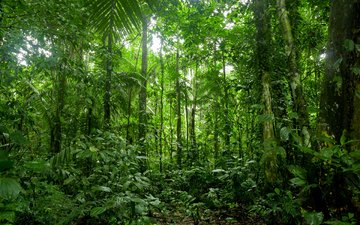 nature, forest, thickets, rainforest