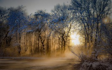 trees, nature, winter, park, morning, fog, dawn, frost