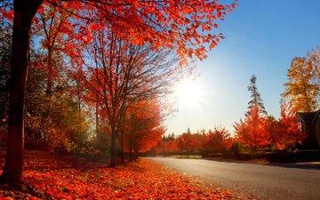 дорога, природа, парк, осень