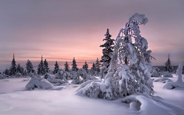snow, nature, forest, winter