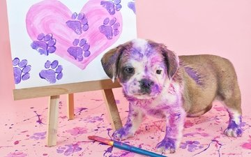 picture, paint, dog, puppy, english bulldog