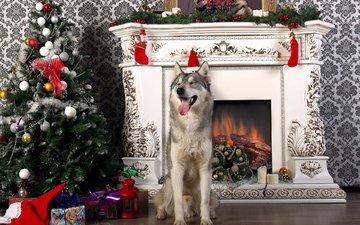 новый год, елка, собака, хаски, камин, язык