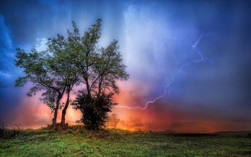 trees, the evening, nature, storm, lightning, the storm