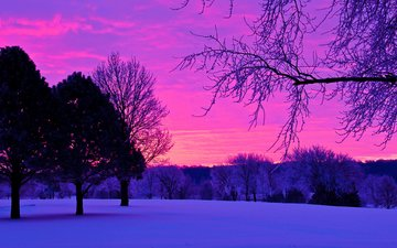 trees, the evening, nature, sunset, winter