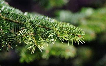 weihnachtsbaum, needles, makro, am, fichte