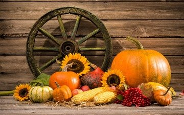 flowers, apples, corn, sunflowers, berries, vegetables, pumpkin, the gifts of autumn