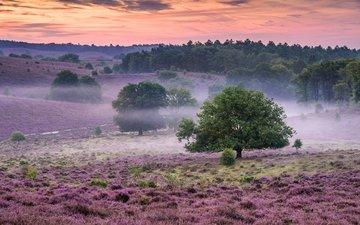 цветы, природа, лес, утро, туман, поле, кусты