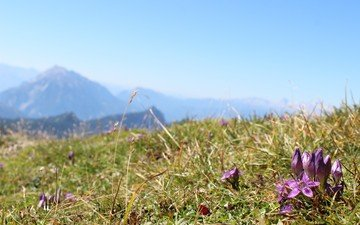 the sky, flowers, grass, mountains, field