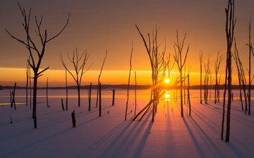 trees, the sun, snow, sunset, winter, landscape