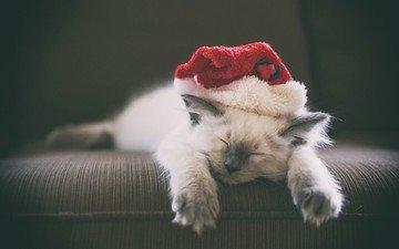 новый год, кошка, котенок, колпак