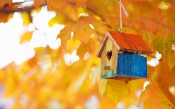 leaves, macro, branches, autumn, birdhouse