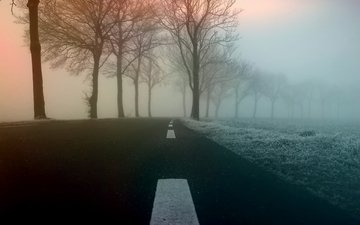 road, trees, nature, fog
