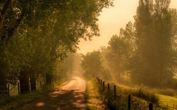 road, grass, trees, morning, fog, the fence