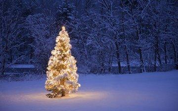 деревья, снег, природа, новый год, елка, лес, зима, рождество, гирлянда