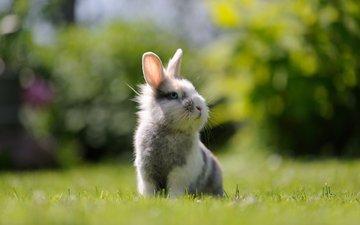 трава, мордочка, взгляд, кролик, заяц, зайка