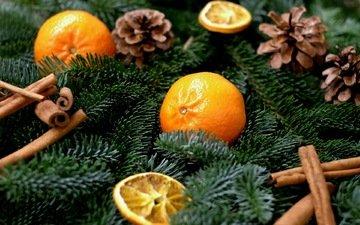 хвоя, ветки, корица, рождество, шишки, мандарины, цитрусы