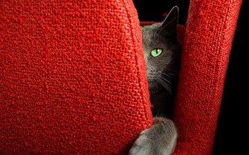 кот, мордочка, усы, кошка, взгляд, кресло, лапка