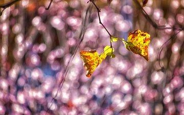 природа, листья, ветки, осень, блики, theophilos papadopoulos