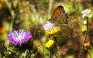 flowers, insect, butterfly, wings, glare, theophilos papadopoulos