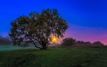 the evening, nature, tree, sunset, landscape, twilight, a w mcmahon