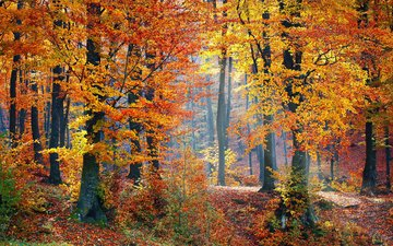 nature, forest, autumn