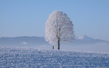 mountains, snow, tree, winter, horizon, cold
