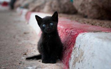 кот, мордочка, усы, кошка, взгляд, котенок, черный