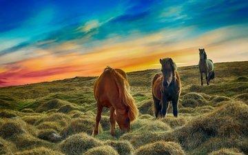пейзаж, животные, лошади, кони, пастбище
