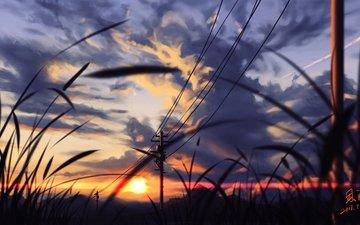grass, nature, sunset, landscape
