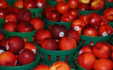 fruit, nectarines, baskets