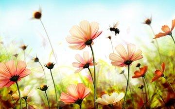 blumen, insekt, blütenblätter, stängel, biene, cosmos