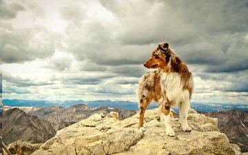 himmel, wolken, die berge, hund, australian shepherd