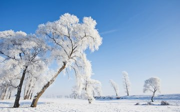 the sky, trees, nature, winter, landscape, frost