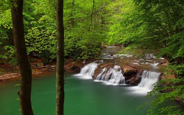 trees, river, nature, forest, waterfall