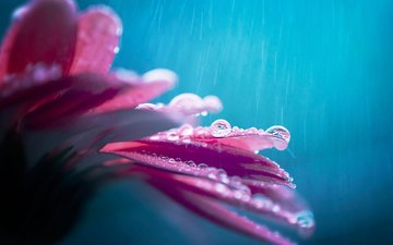 flower, drops, petals, rain, bokeh, gerbera