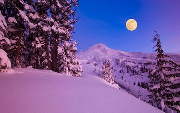 trees, snow, nature, forest, winter, the moon
