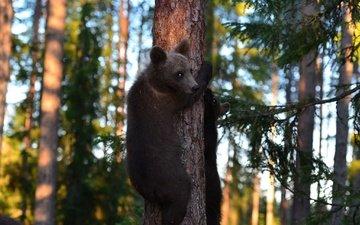 bäume, wald, bären, teddybären