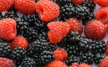 macro, raspberry, berries, blackberry